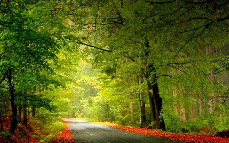 flowers forests wallpaper