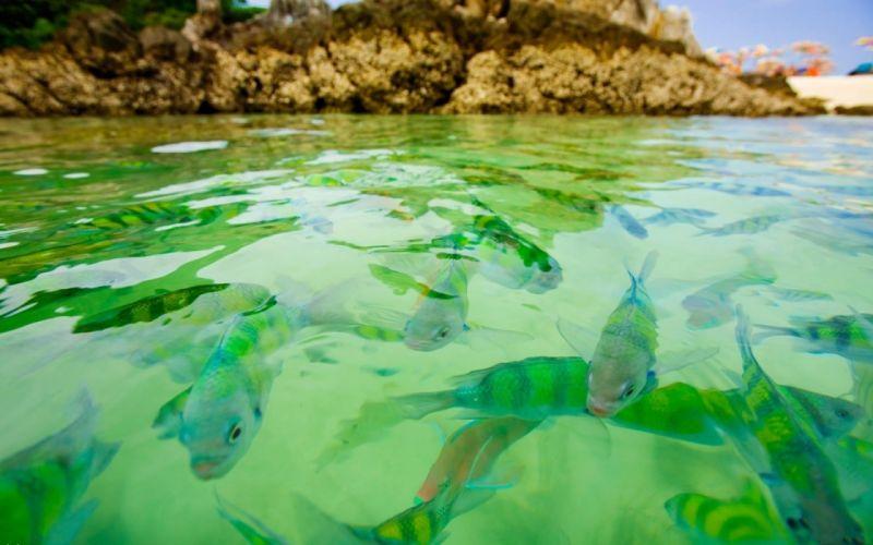 water fish wallpaper