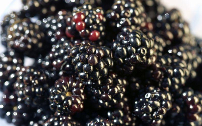 fruits berries white background blackberries wallpaper