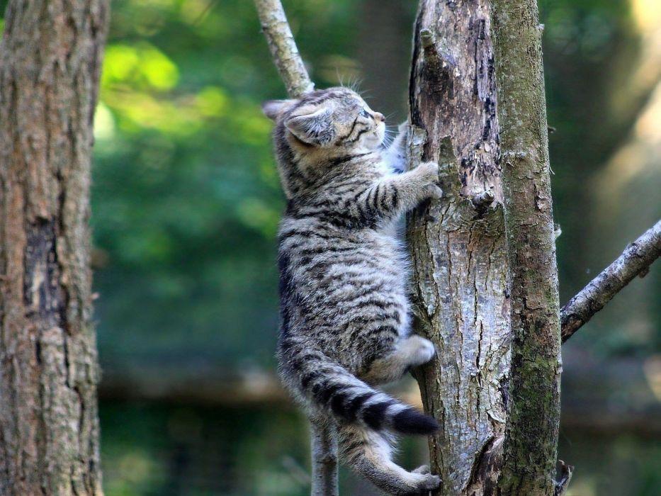 trees cats funny wallpaper