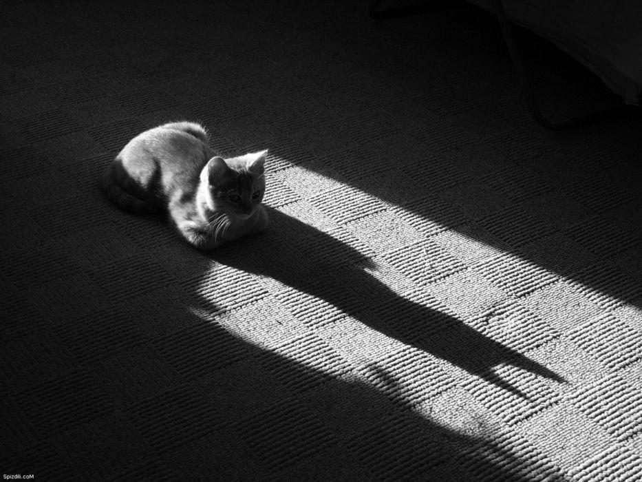 Batman cats grayscale wallpaper