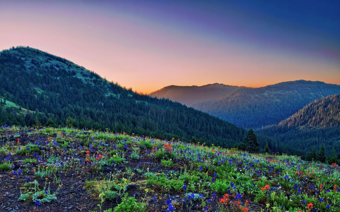 mountains landscapes flowers wallpaper