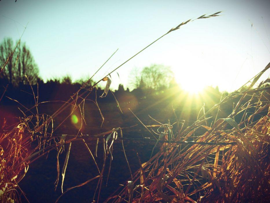 nature sunlight macro depth of field wallpaper