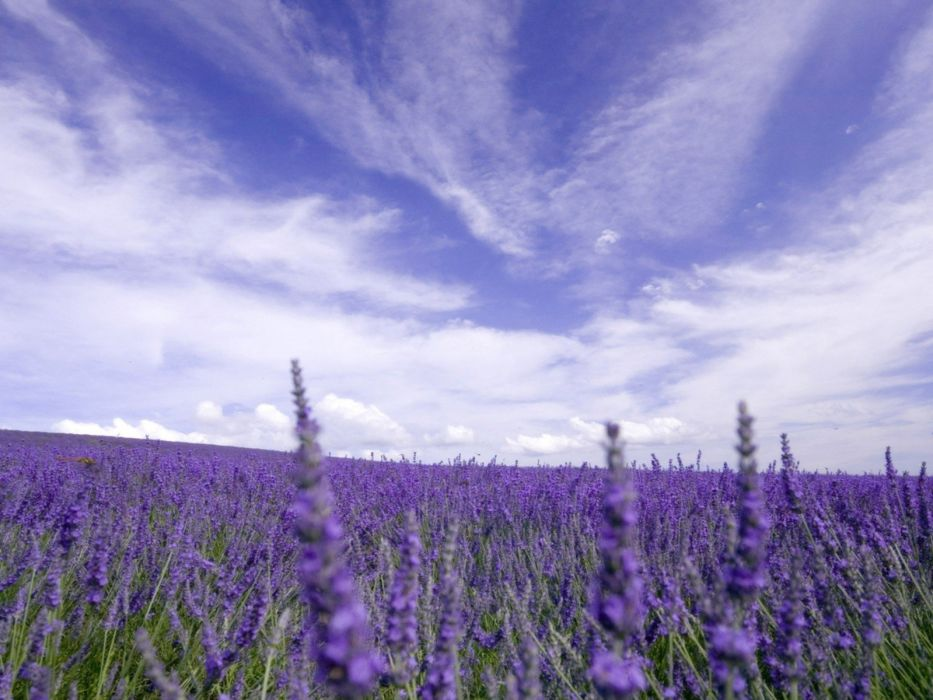 clouds landscapes nature skylines lavender purple flowers wallpaper