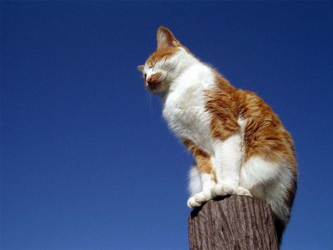 nature cats animals wallpaper