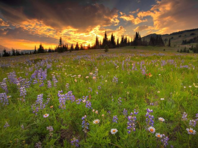 clouds landscapes nature trees flowers wildflowers wallpaper