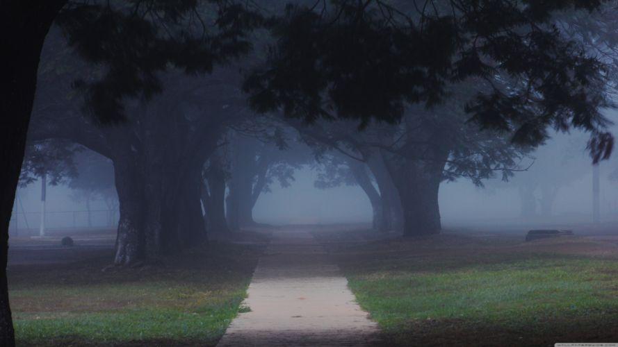 green nature trees roads wallpaper