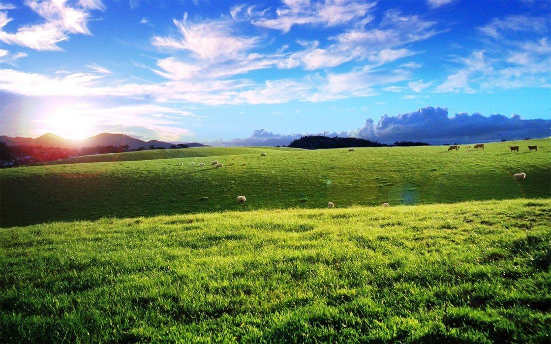 nature hills cows wallpaper
