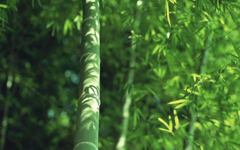 Japan bamboo wallpaper