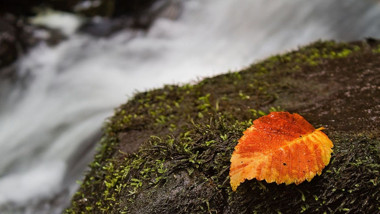 nature autumn leaves rocks moss macro depth of field waterfalls wallpaper