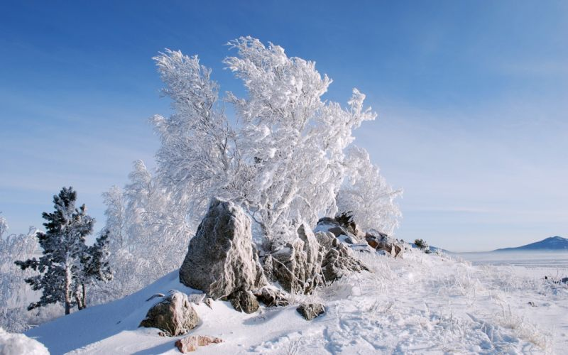 snow trees stones New Year frost wallpaper