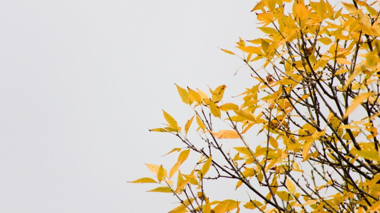 clouds trees autumn wall wallpaper