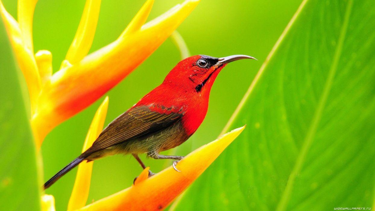 nature birds animals Sunbirds wallpaper