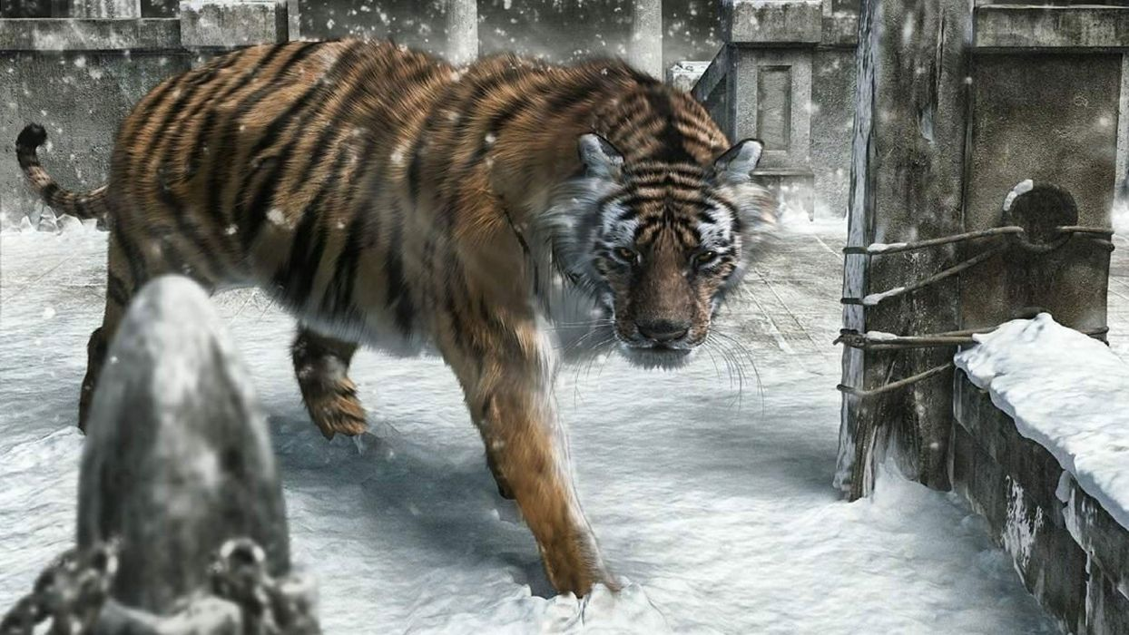snow animals tigers New Year wallpaper