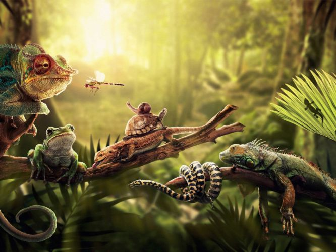 forests insects chameleons turtles snakes frogs snails reptiles iguana amphibians palm leaves wallpaper