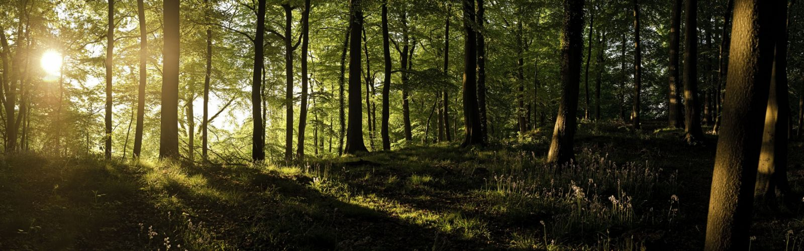 trees England forests sunlight United Kingdom panorama wallpaper