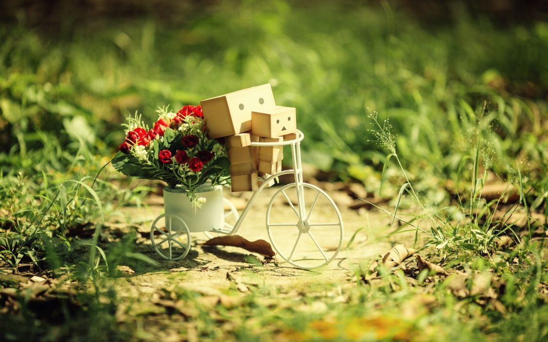 flowers grass Danboard depth of field potted plant cycles wallpaper