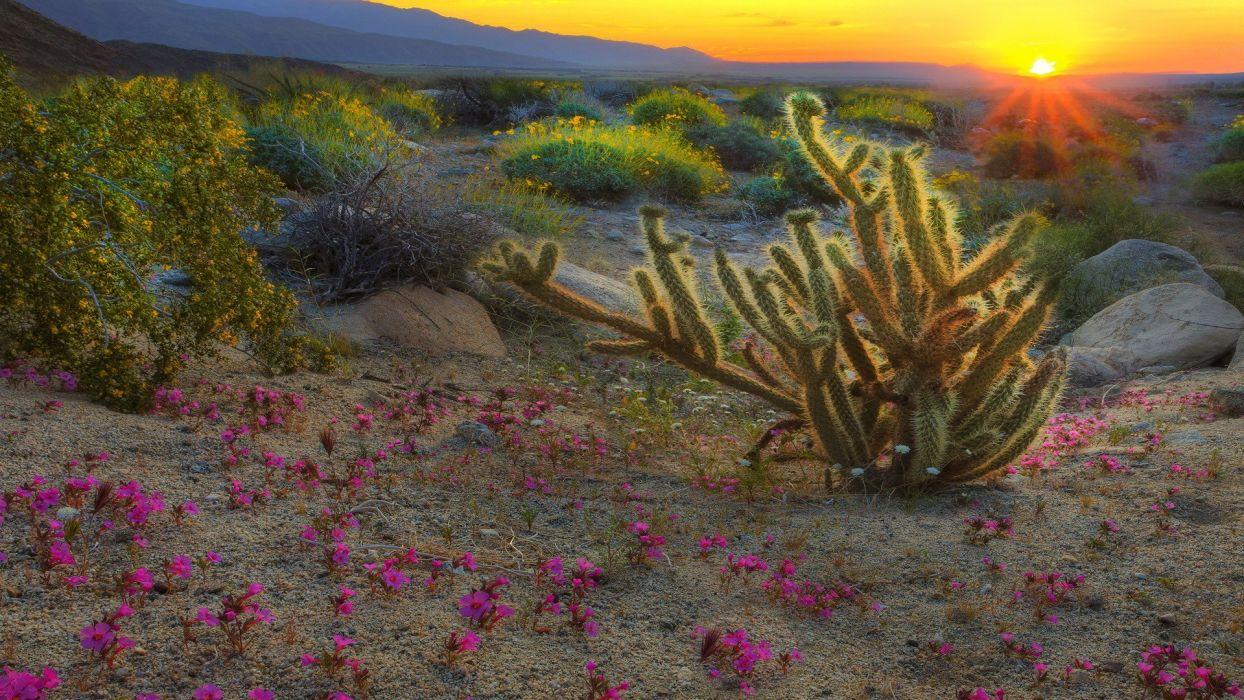 sunrise spring California parks wallpaper