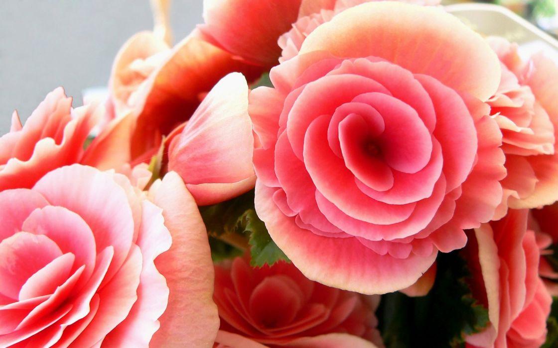 flowers pink plants wallpaper