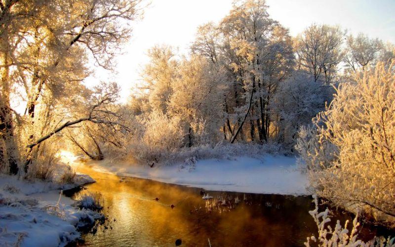 winter snow trees lakes wallpaper