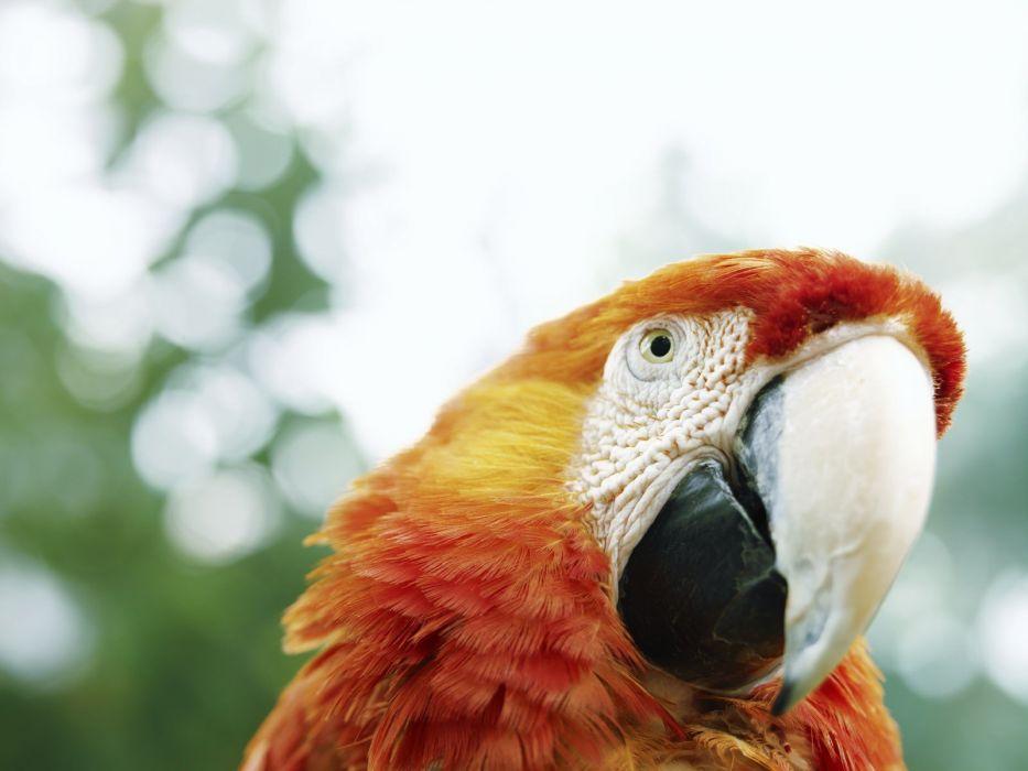 birds parrots Macaw wallpaper