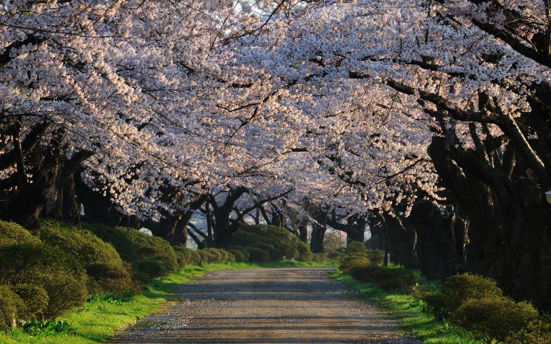 Japan landscapes nature trees wallpaper