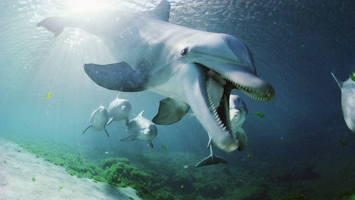 Hawaii dolphins wallpaper
