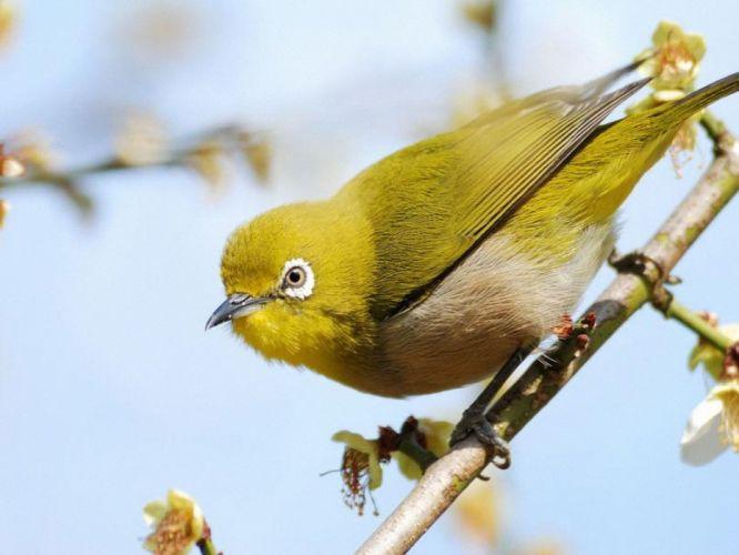 nature birds wallpaper