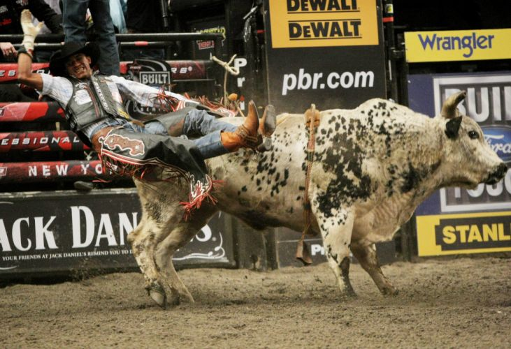 bull riding bullrider rodeo western cowboy extreme cow (1) wallpaper