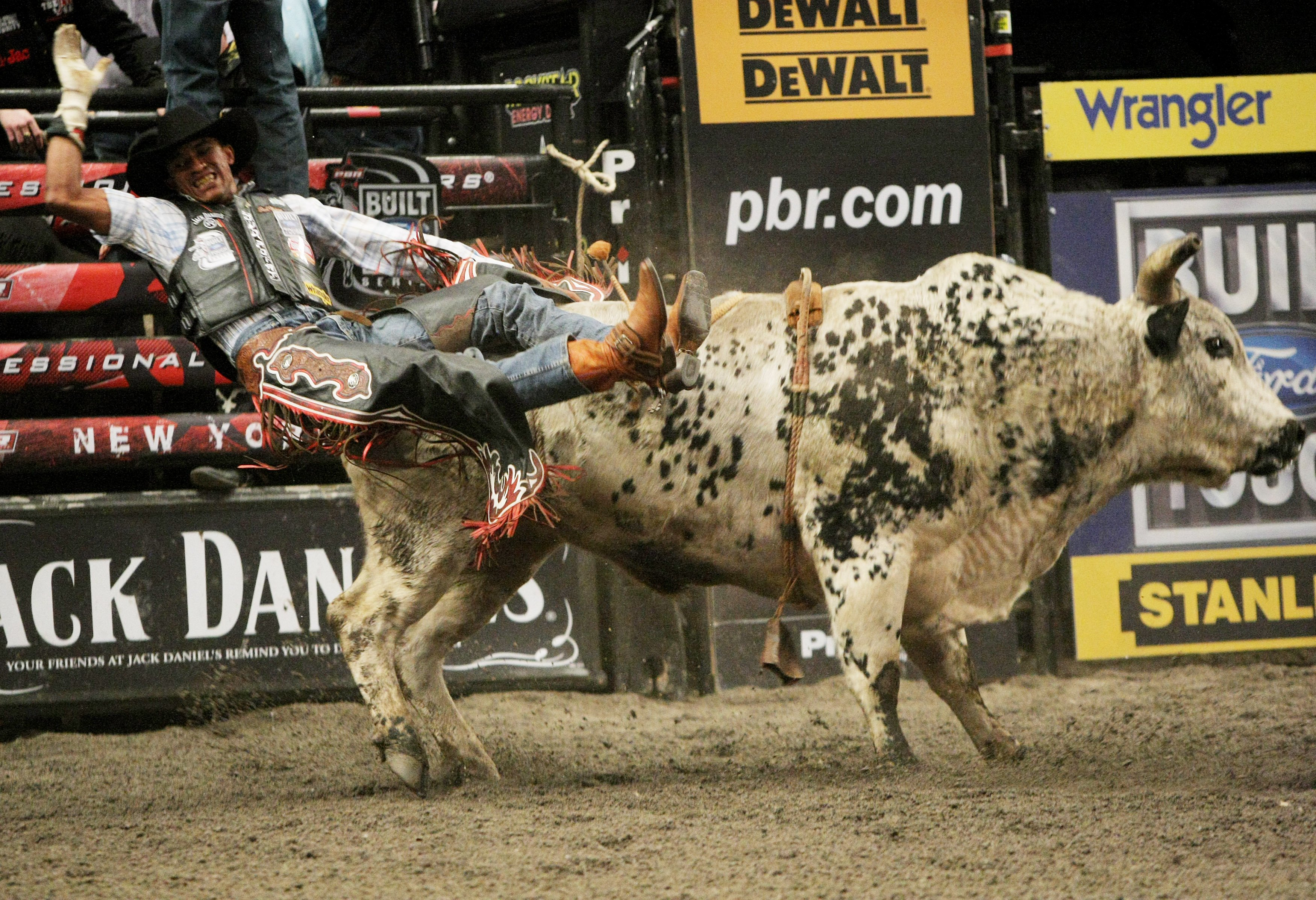 bull riding bullrider rodeo western cowboy extreme cow 1