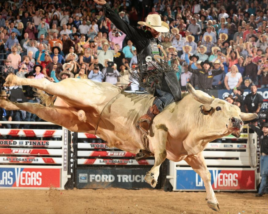 bull riding bullrider rodeo western cowboy extreme cow (3) wallpaper