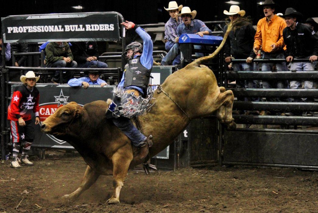 bull riding bullrider rodeo western cowboy extreme cow (9)_JPG wallpaper