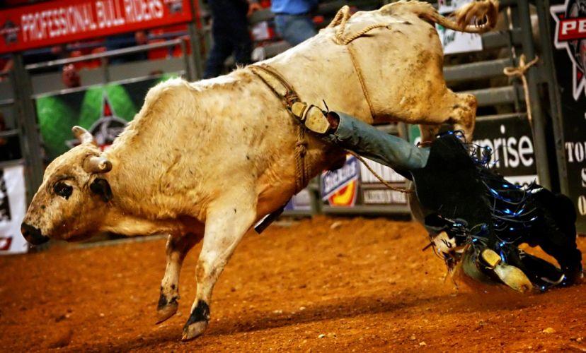 bull riding bullrider rodeo western cowboy extreme cow (10) wallpaper