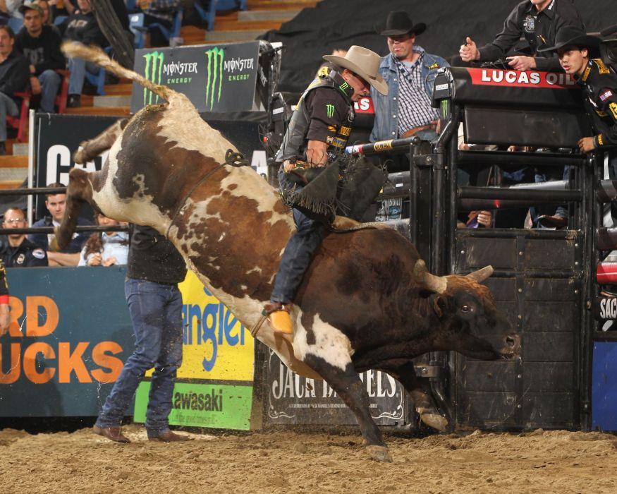 bull riding bullrider rodeo western cowboy extreme cow (12)_JPG wallpaper