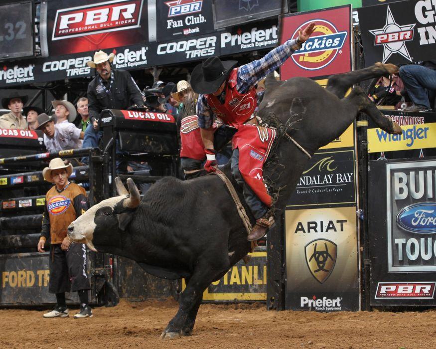 bull riding bullrider rodeo western cowboy extreme cow (13)_JPG wallpaper