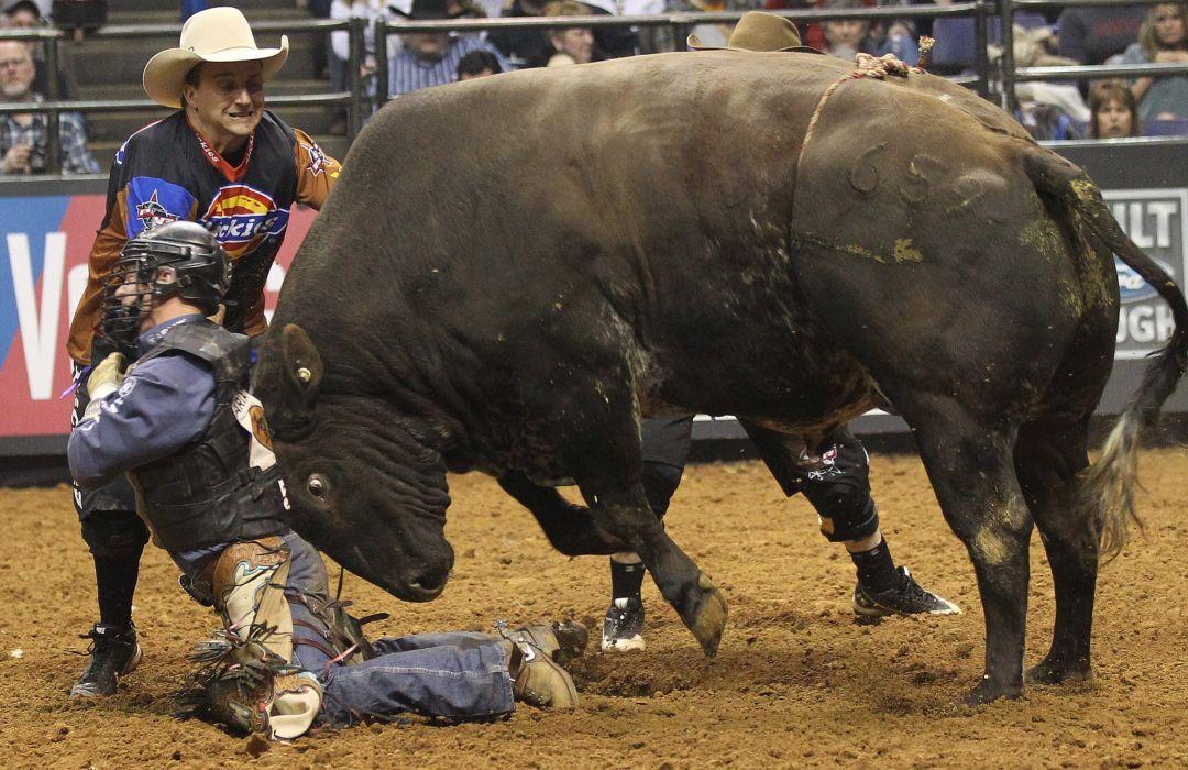 bull riding bullrider rodeo western cowboy extreme cow (16) wallpaper