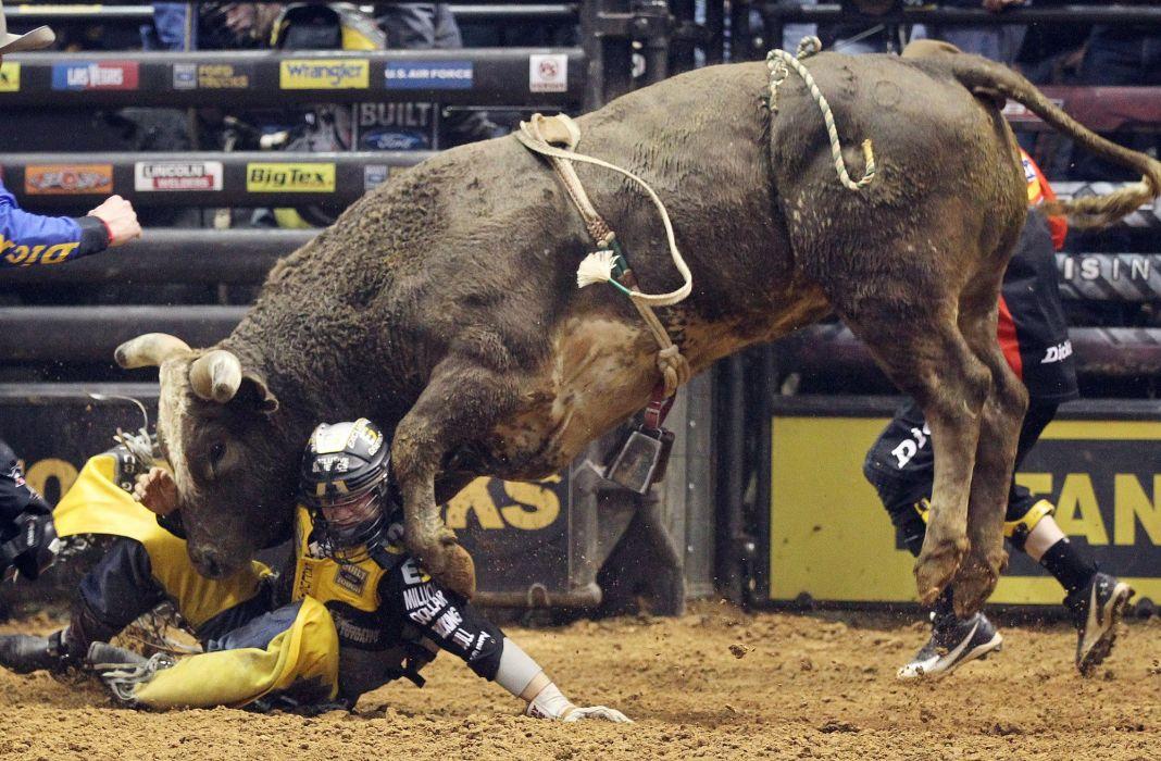 bull riding bullrider rodeo western cowboy extreme cow (18) wallpaper