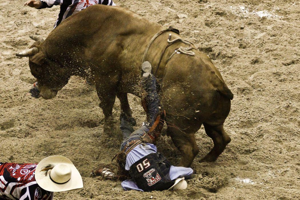 bull riding bullrider rodeo western cowboy extreme cow (20)_JPG wallpaper