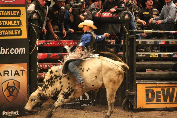 bull riding bullrider rodeo western cowboy extreme cow (23) wallpaper