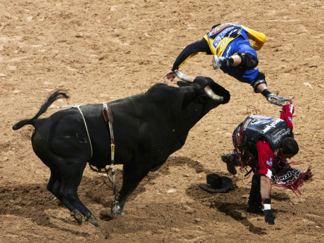 bull riding bullrider rodeo western cowboy extreme cow (22) wallpaper