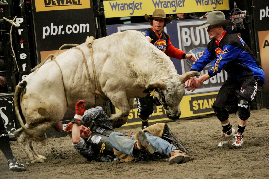 bull riding bullrider rodeo western cowboy extreme cow (24) wallpaper