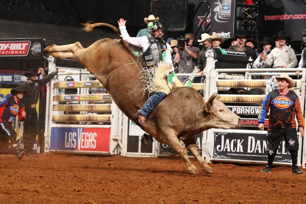 bull riding bullrider rodeo western cowboy extreme cow (26) wallpaper