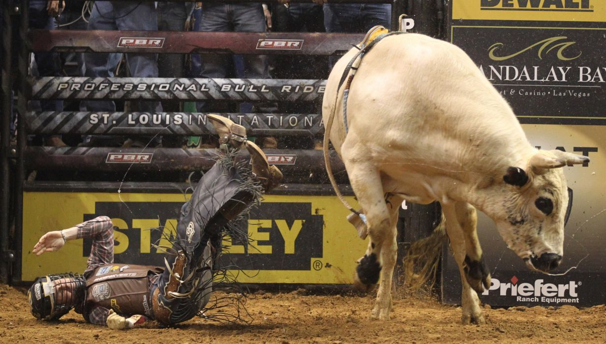 bull riding bullrider rodeo western cowboy extreme cow (29) wallpaper