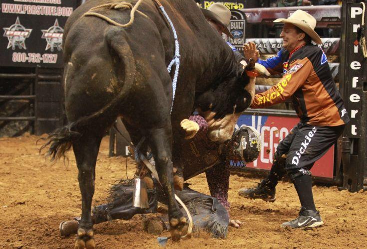 bull riding bullrider rodeo western cowboy extreme cow (34) wallpaper