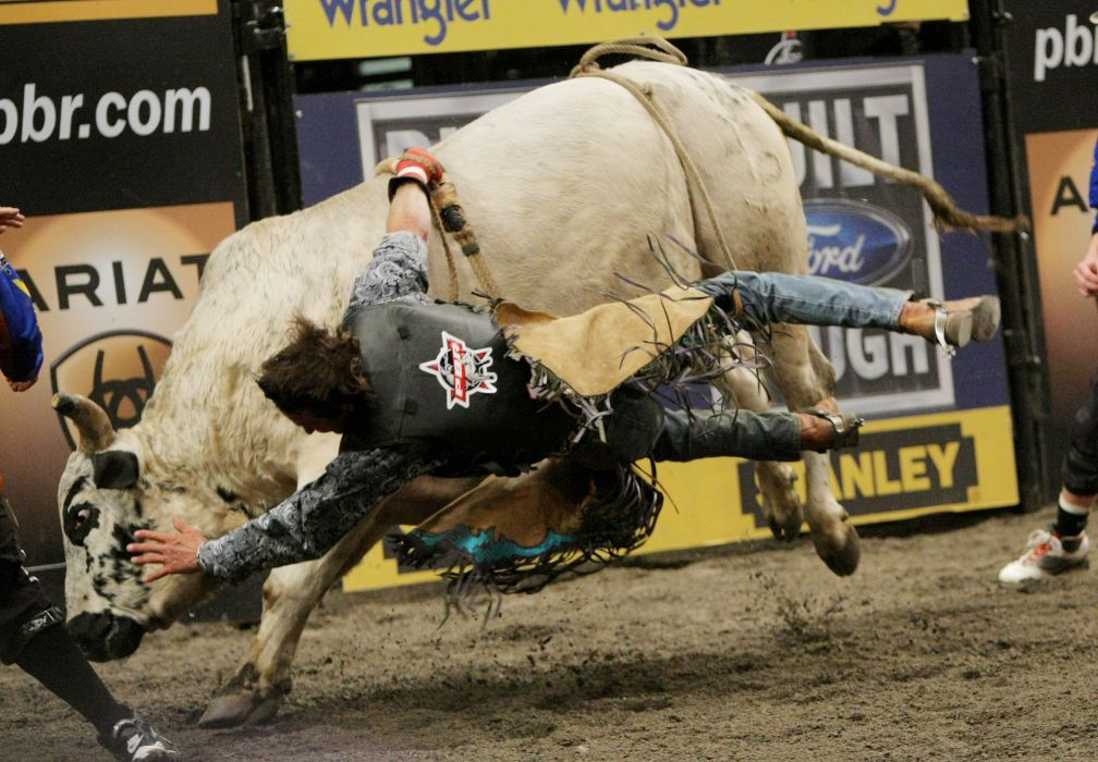 bull riding bullrider rodeo western cowboy extreme cow (38) wallpaper