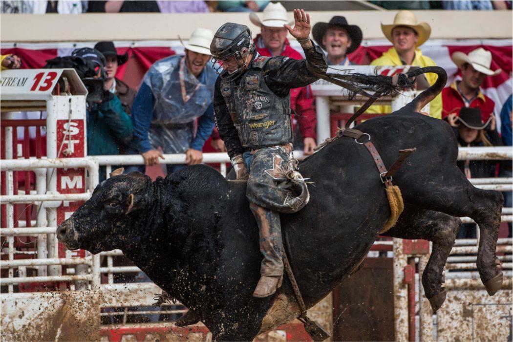 bull riding bullrider rodeo western cowboy extreme cow (37) wallpaper