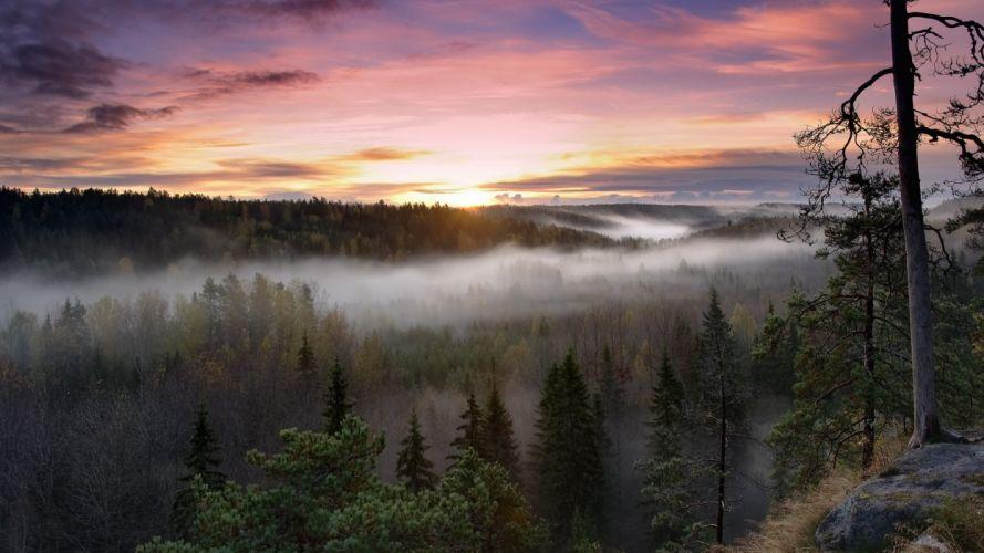 sunrise landscapes nature trees forests fog National Park wallpaper