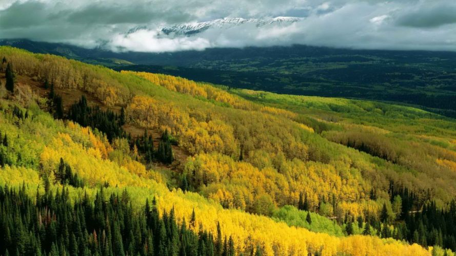 autumn forests national Colorado Aspen wallpaper