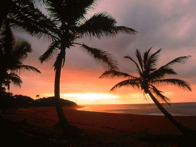paradise palm trees Dominican Republic wallpaper
