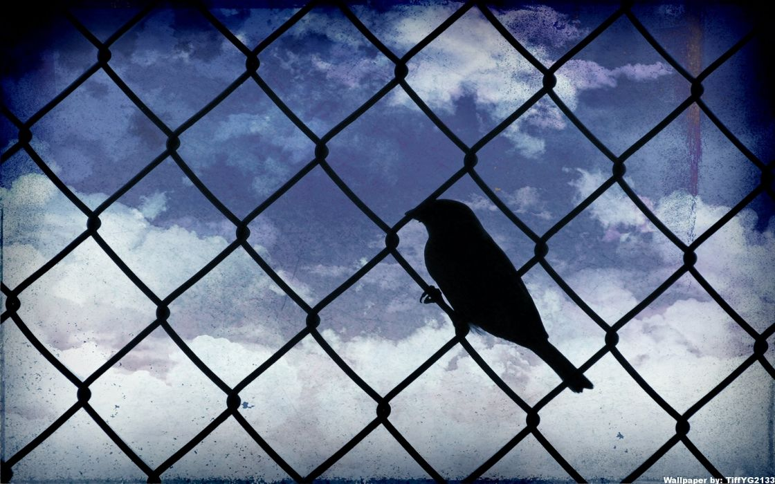 birds silhouettes skyscapes chain link fence wallpaper